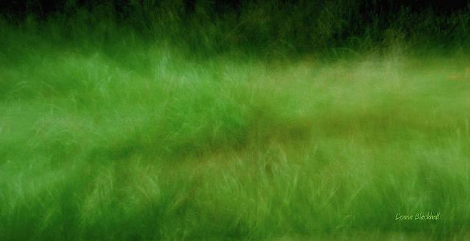Donna Blackhall - Meadow Dream