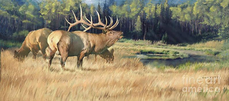 Meadow Music by Rob Corsetti