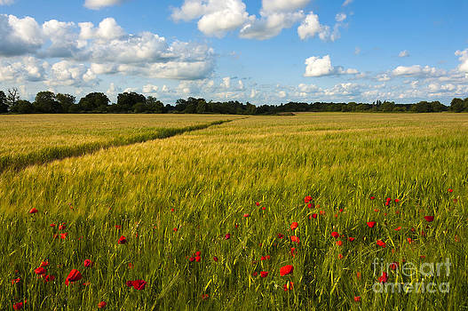 Svetlana Sewell - Meadow of Poppies
