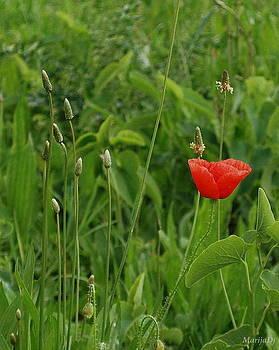 Meadow ornament by Marija Djedovic