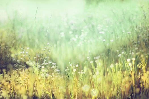 Meadowland by Amy Tyler