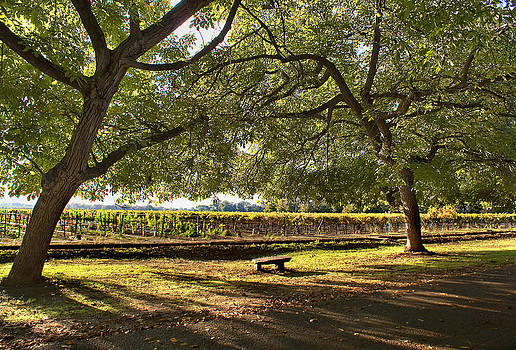 Meditation at the Vineyards by Abram House