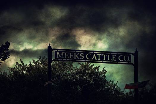 Meeks Cattle by Emily Stauring