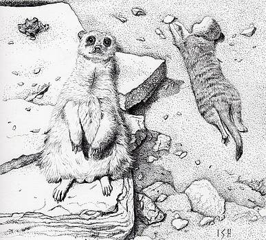 Meerkats by Inger Hutton