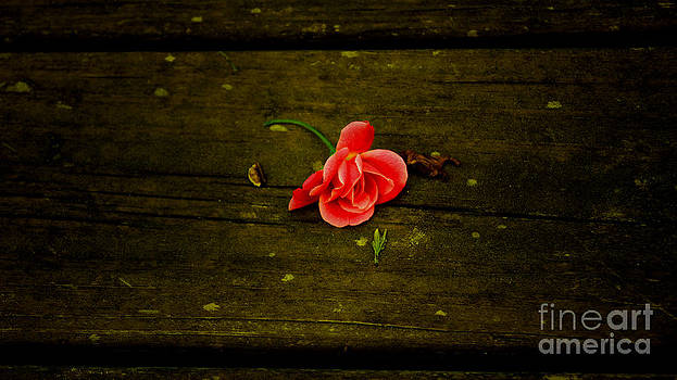 Memories Of Prom Dreams by Kim Pate