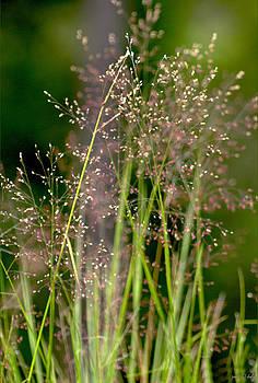 Holly Kempe - Memories of Springtime