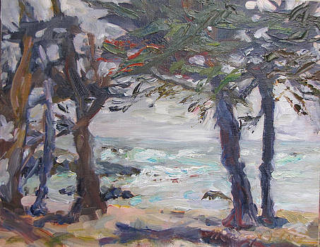 Mendocino Cypress Grove by Marcy Silveira