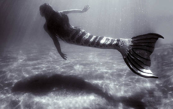 Mermaid Swim By by Greg Amptman