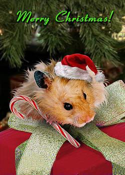 Jeanette K - Merry Christmas Hamster