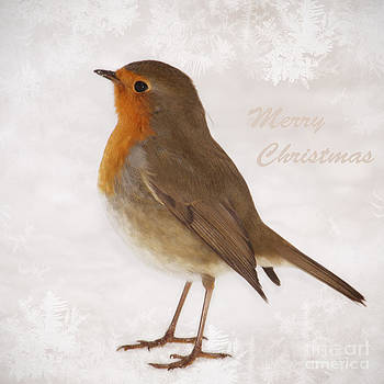 HJBH Photography - Merry Christmas