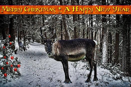 Chris Lord - Merry Christmas Reindeer