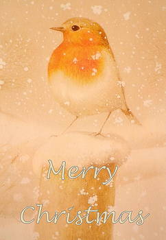 Merry Christmas Robin by The Creative Minds Art and Photography