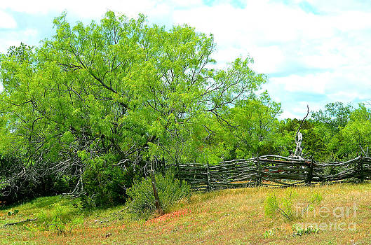 Mesquite Tree and Cedar Post Fence by Linda Cox