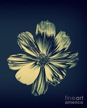 Metallic Spring Bloom by Alex Blaha