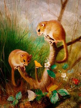 Pamela Phelps - Mice Are Nice
