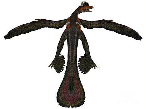 Corey Ford - Microraptor Profile on White