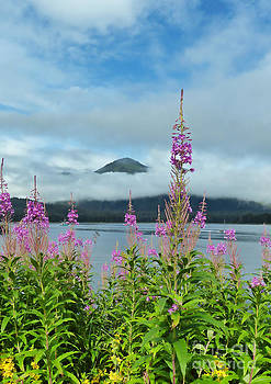Mid Summer Fireweed by Thierry Borcy