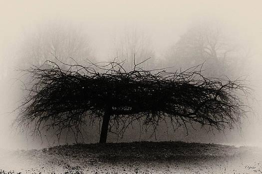 TONY GRIDER - MIDDLETHORPE TREE IN FOG SEPIA - AWARD WINNING PHOTOGRAPH