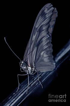 Midnight Angel by Ann-Charlotte Fjaerevik