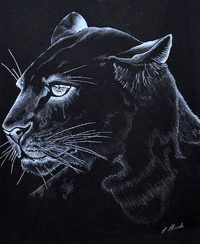 Midnight Cougar by Larry Edwards