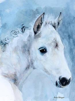 Midnight Frost  by Rosie Morgan