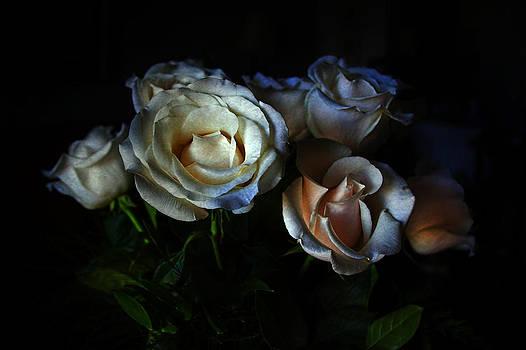 Midnight Roses by Joan Bertucci