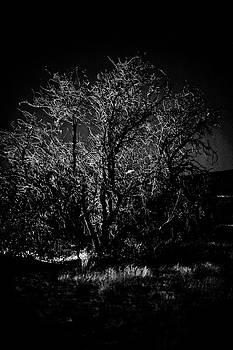 Gilbert Artiaga - Midnight Tree