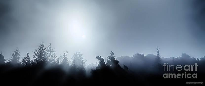 Simon Bratt Photography LRPS - Midnight treetops in fog