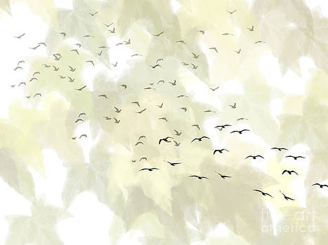 Migration by Trilby Cole