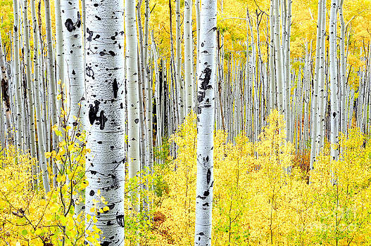 Miles of Gold by The Forests Edge Photography - Diane Sandoval