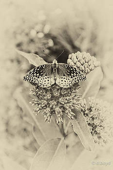 Milkweed and Butterfly by Diana Boyd