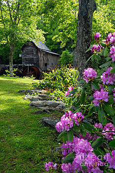 Larry Ricker - Mill and Rhododendrons