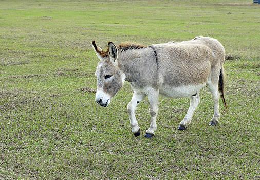 Laurie Perry - Mill Creek Mule