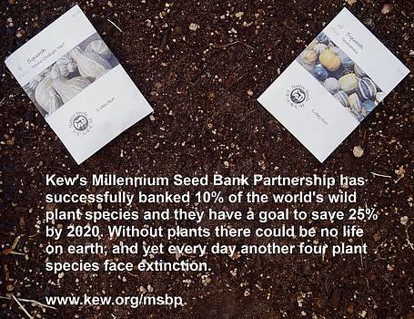 Millennium Seed Bank Partnership by Jon Simmons