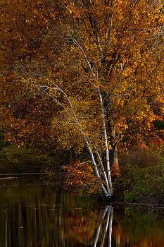 Miller Pond by Charlene Palmer