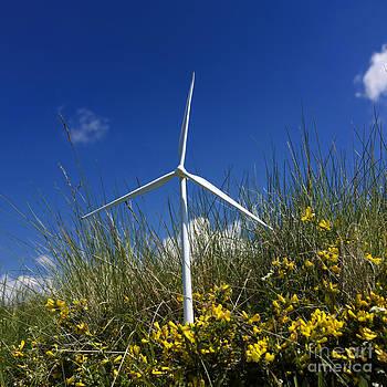 BERNARD JAUBERT - Miniature wind turbine in nature
