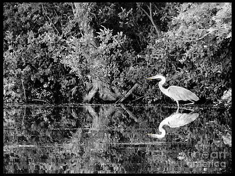 Mirror Image by Jack Gannon