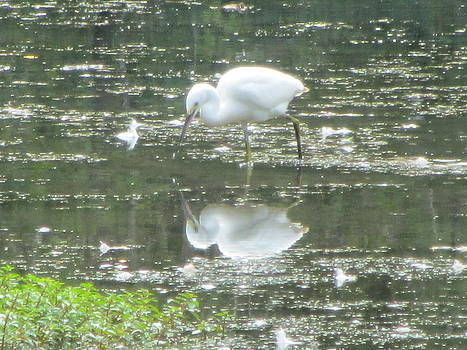 Mirror Image of the Snowy Egret by Debbie Nester