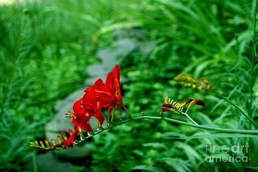 Miss Red Bee by Virginia Pakkala