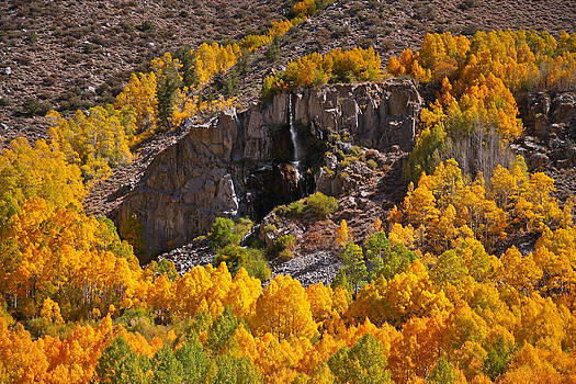 Mist Falls and Aspen in Autumn by Steve Wolfe
