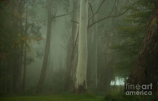Mistical  Mount Wilson NSW Australia by Philip Johnson