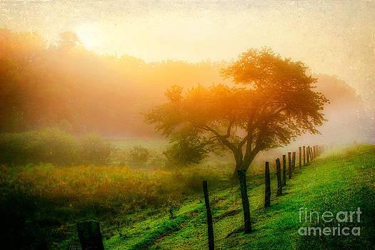 Dan Carmichael - Misty Blue Ridge Sunrise 4177