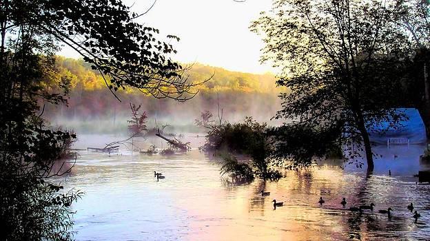 Misty Bog by Mark Cranston