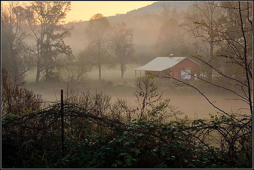 Misty Morn And Horse by Kathy Barney