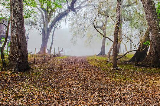 Misty Morning by Gordon H Rohrbaugh Jr