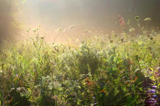 Misty Morning by John Robichaud