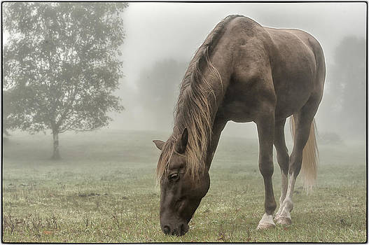 Misty Morning by Peter Lindsay