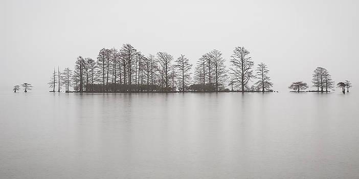 Misty Morning Photograph - Cypress Trees in the Rain  by Bill Swindaman