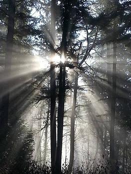 Crista Forest - Misty Morning Sunrise