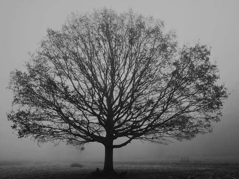 Misty Nature   by Maj Seda